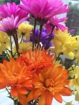 Mixed Chrysanthemums (Aldi)