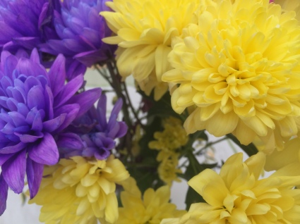Yellow and Purple Chrysanthemums (Aldi)