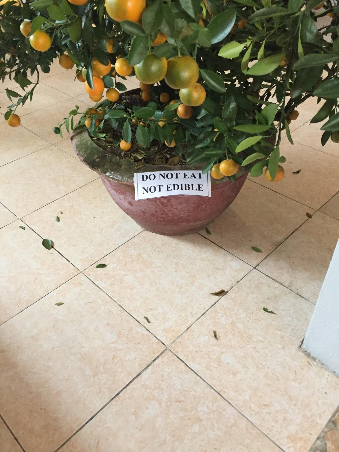 Sign in Canteen, Hoi An, Vietnam