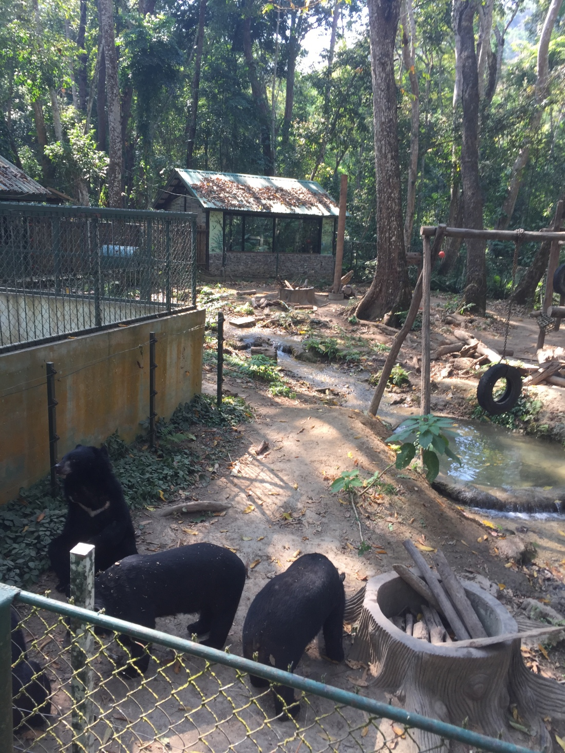 Bear Sanctuary Luang Prabang Laos