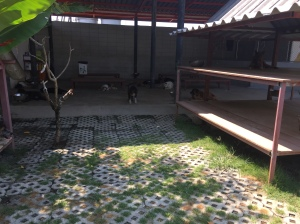 Dog Enclosure at Soi Dog Foundation Phuket