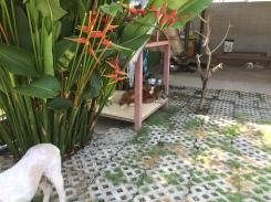 Dog chilling at Soi Dog Foundation Phuket