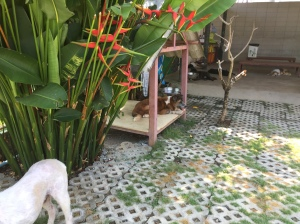 Dog chilling at Soi Dog Foundation Phuket