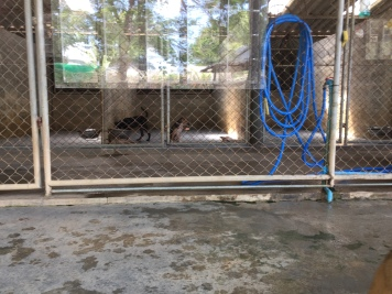 Dogs in Kennels at Soi Dog foundation Phuket