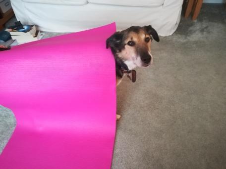 dog wearing a pilates mat