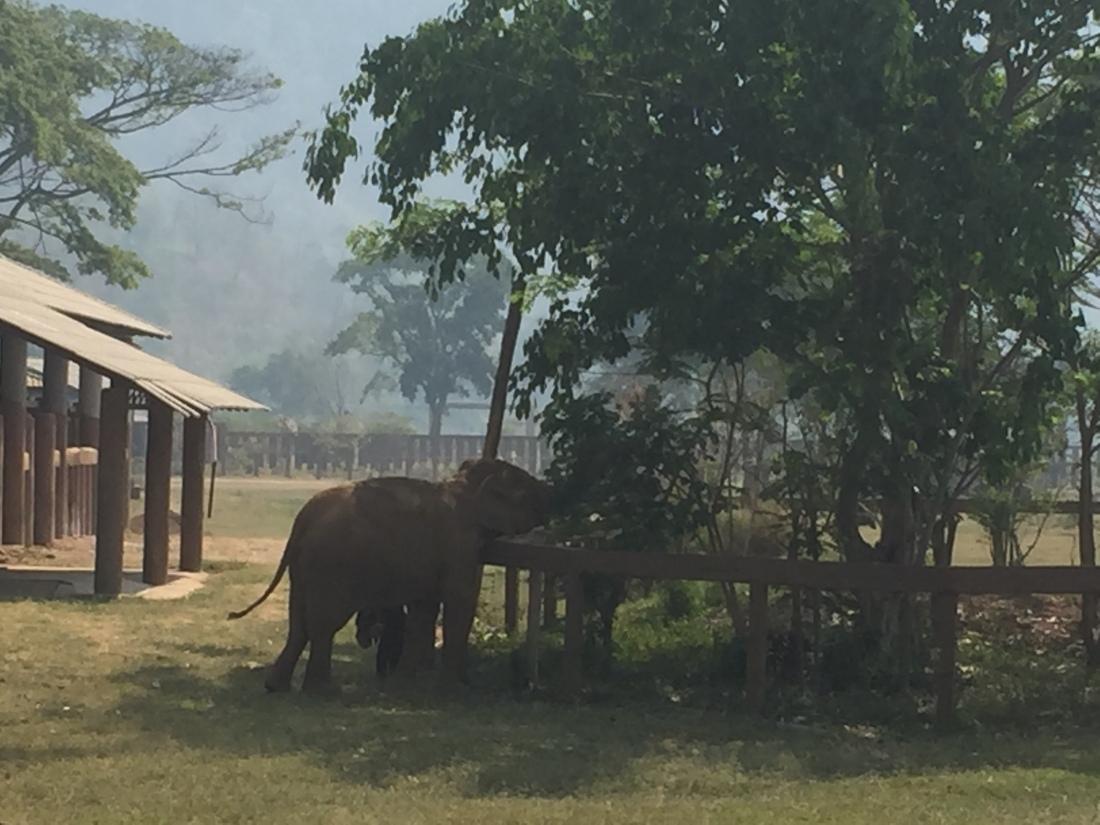 elephant next to trees at Elephant Nature Park Thailand