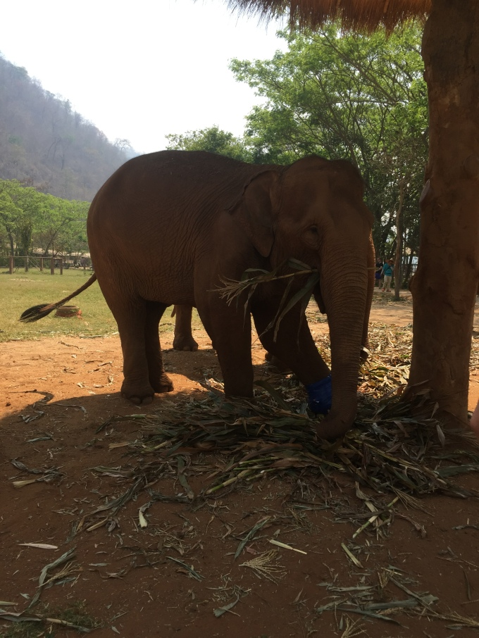 elephant with leaves in its trunk