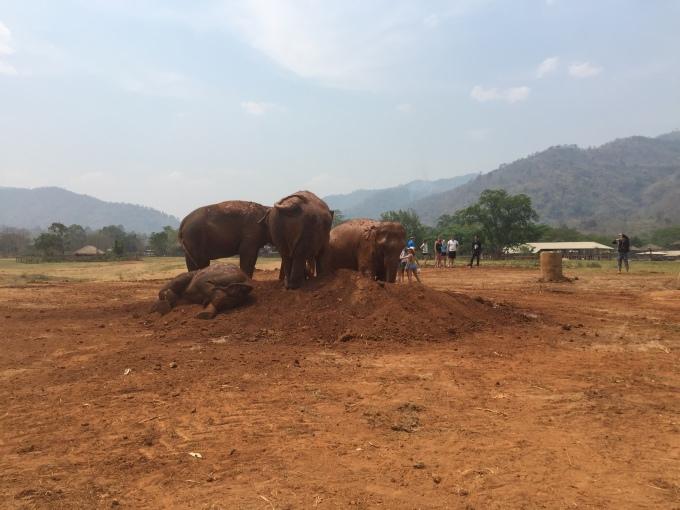 elephants playing in dirt mountain, Chiang Mai
