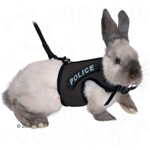 rabbit wearing a harness that reads 'police'